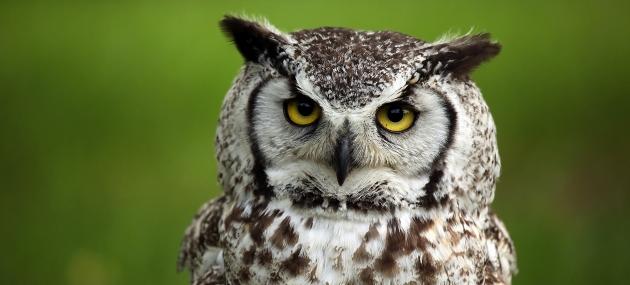 Taller de Fauna: Huellas y Rastros